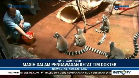 Tiga Anggota Baru Kebun Binatang Malang