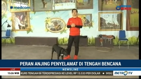 Peran Anjing Penyelamat di Tengah Bencana