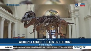 World's Largest T-Rex on the Move at Chicago's Field Museum