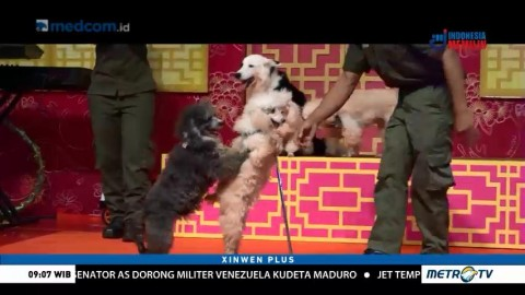 Jelang Imlek, Pusat Perbelanjaan di Jakarta Tampilkan Atraksi Anjing