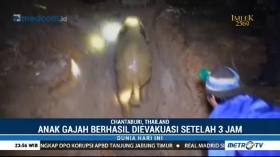 Aksi Heroik Penyelamatan Anak Gajah dari Dalam Sumur