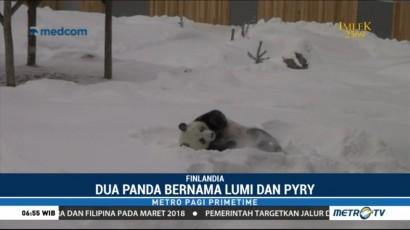 Kebun Binatang Finlandia Kenalkan Dua Panda Asal Tiongkok