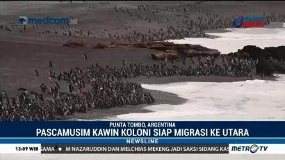 Ratusan Ribu Pinguin Siap Bermigrasi