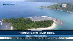 Lampung Punya Lumba-Lumba Terbesar di Asia