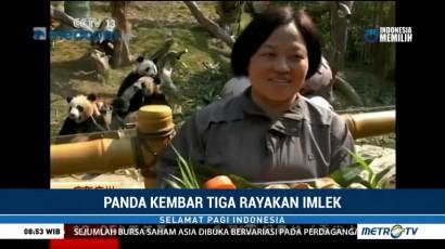 Panda Kembar Tiga Rayakan Imlek dengan Makanan Spesial