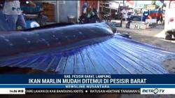 Menikmati Sate Ikan Tuhuk Khas Pesisir Barat Lampung