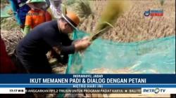 Ridwan Kamil Blusukan ke Sawah di Indramayu