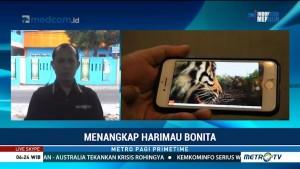 Harimau Bonita Masih Berkeliaran, Siswa SD Diliburkan