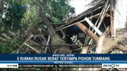 Lima Rumah di Magelang Rusak Tertimpa Pohon Tumbang