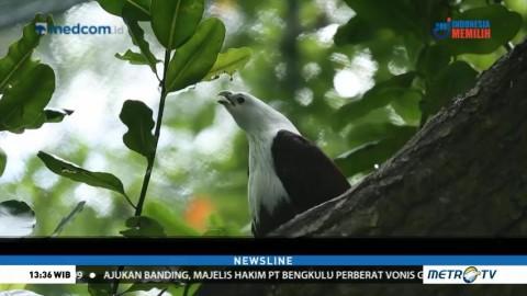 Melihat Konservasi dan Ekowisata Kepulauan Seribu (1)