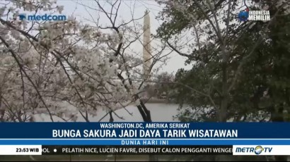 Sakura Bermekaran di Amerika Serikat