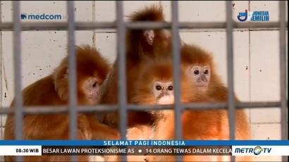 Jaga Habitat Hewan Langka (3)