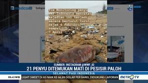 21 Penyu Ditemukan Mati di Pesisir Paloh Diduga Keracunan Limbah Kimia