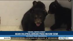 Empat Bayi Beruang Lahir di Pusat Satwa Liar Virginia