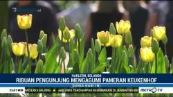 Keindahan Bunga Tulip yang Bermekaran di Belanda