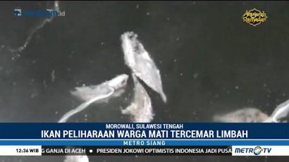 Ratusan Ekor Ikan Milik Warga Morowali Mati Tercemar Limbah