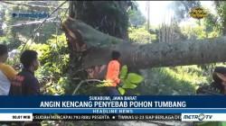 Pohon Tumbang Timpa Sejumlah Kendaraan di Sukabumi