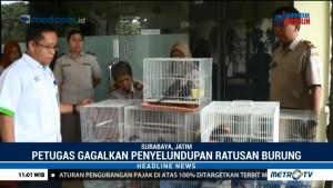 279 Ekor Burung Gagal Diselundupkan ke Surabaya