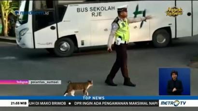 Polisi Bantu Kucing Menyeberang Jalan