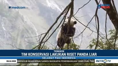 Tim Taman Nasional Wolong Temukan Bayi Panda Liar