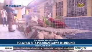 Polairud Polda Maluku Utara Gagalkan Penyelundupan Satwa Dilindungi