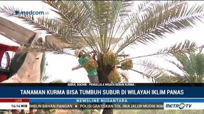 Yuk! Wisata ke Kebun Kurma di Pasuruan