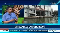 Buaya Berkeliaran di Teluk Jakarta Sudah Terlihat Sejak 2015