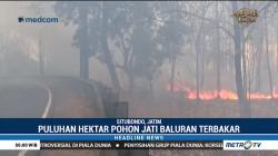 Puluhan Hektar Hutan Jati Taman Nasional Baluran Terbakar