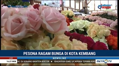 Pesona Beragam Mawar di Grace Rose Farm Lembang