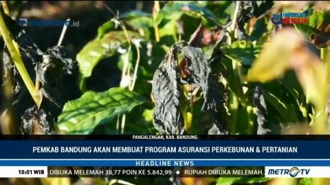 Sejumlah Lahan Pertanian dan Perkebunan di Kabupaten Bandung Gagal Panen