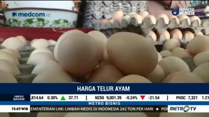 Harga Telur Ayam Mencapai Rp37 Ribu