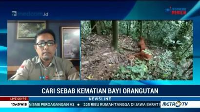 Pengelola TNGL Selidiki Penyebab Kematian Bayi Orangutan