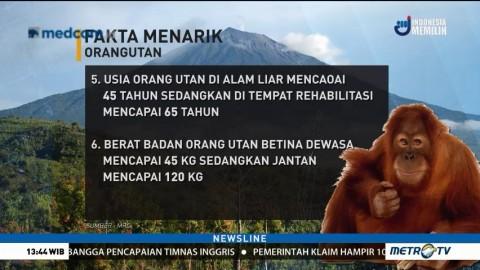 Fakta Menarik Tentang Orangutan