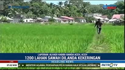 Kekeringan, Petani di Aceh Barat Terancam Gagal Panen