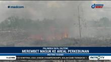 Kebakaran Lahan di Kalteng dan Riau Terus Meluas