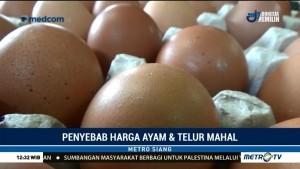 Harga Telur Ayam Naik Akibat Libur Panjang & Cuaca