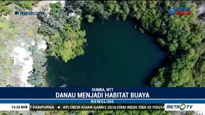 Danau Waimulang di Sumba Jadi Habitat Buaya