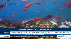 Pesona Bawah Laut Labuan Bajo