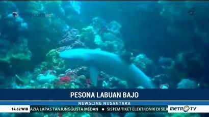 Menikmati Keindahan Bawah Laut Labuan Bajo