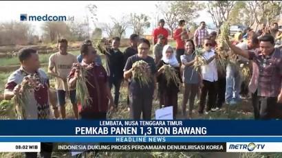 Kabupaten Lembata Panen Perdana Bawang Merah 1,3 Ton