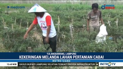 Kekeringan, Petani di Lampung Gagal Panen