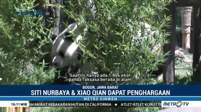 Panda TSI Dapat Penghargaan Internasional