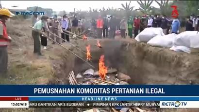 Balai Besar Karantina Surabaya Musnahkan Komoditas Pertanian Ilegal