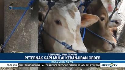 Peternak Sapi di Semarang Kebanjiran Pesanan