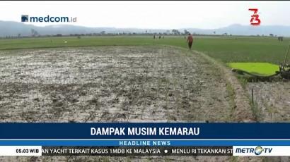 Kekeringan, Puluhan Hektare Tanaman Padi di Semarang Terancam Mati