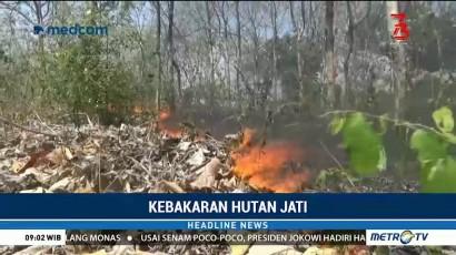 Hutan Jati Milik Perhutani di Tuban terbakar