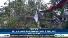 Aceh Diterpa Hujan Angin Kencang, Sebuah Pohon Besar Tumbang