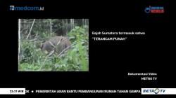 Bersahabat dengan Gajah (1)
