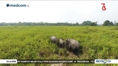 Bersahabat dengan Gajah (2)
