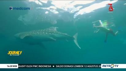 Journey to Taman Nasional Teluk Cendrawasih (2)